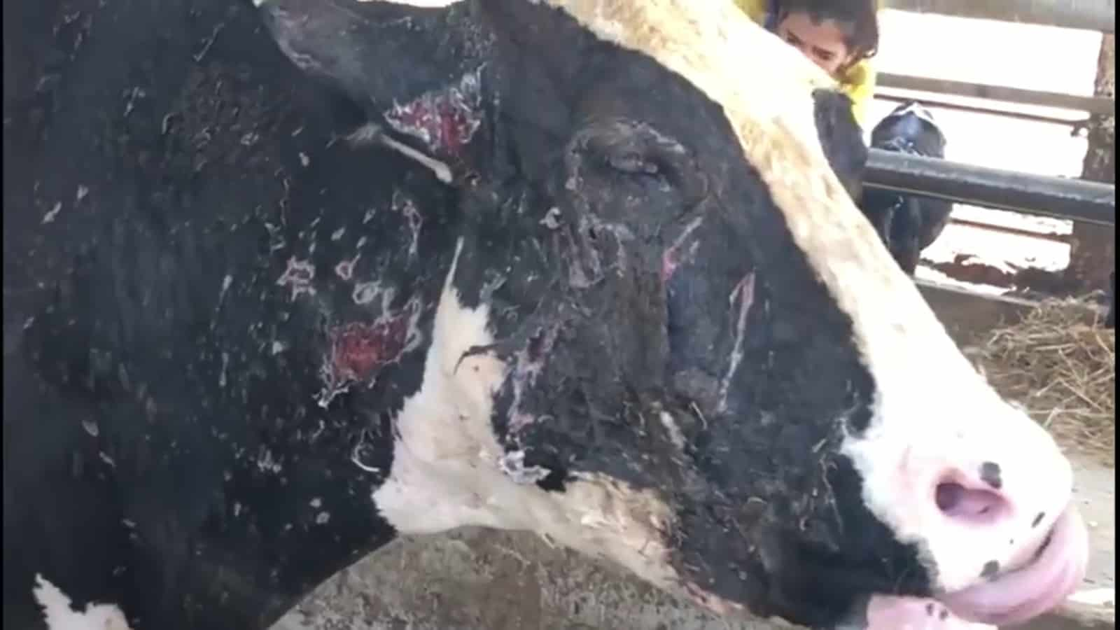תחקיר ''קירות שקופים'' בבית הספר מקווה ישראל בחולון