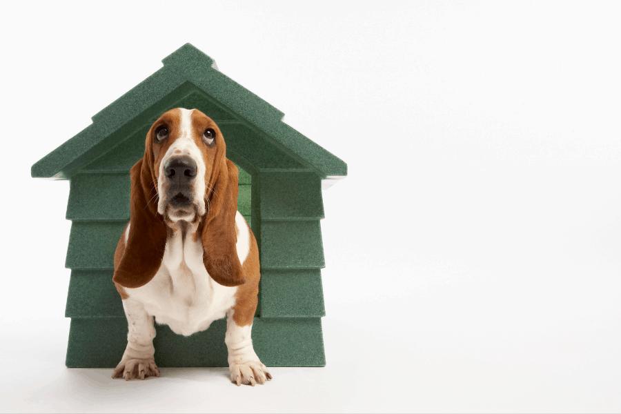 ליעד מרום – canva מלונה לכלב